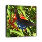 butterfly red - Mini Canvas 6  x 6  (Stretched)