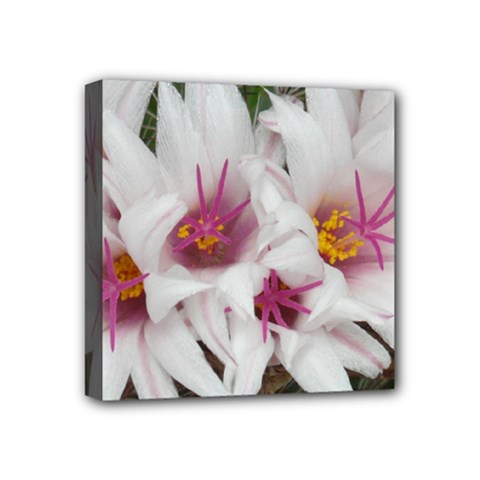 Bloom Cactus  Mini Canvas 4  X 4  (framed) by ADIStyle