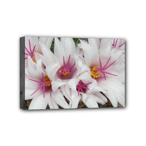 Bloom Cactus  Mini Canvas 6  X 4  (framed) by ADIStyle