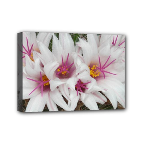 Bloom Cactus  Mini Canvas 7  X 5  (framed) by ADIStyle