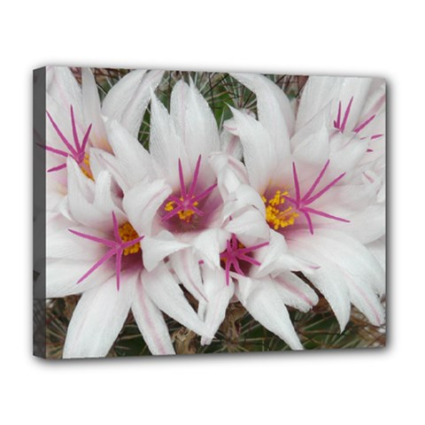 Bloom Cactus  Canvas 14  X 11  (framed) by ADIStyle