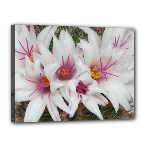 Bloom Cactus  Canvas 16  X 12  (framed) by ADIStyle