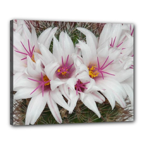Bloom Cactus  Canvas 20  X 16  (framed) by ADIStyle