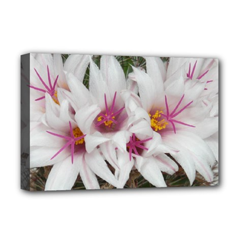 Bloom Cactus  Deluxe Canvas 18  X 12  (framed) by ADIStyle