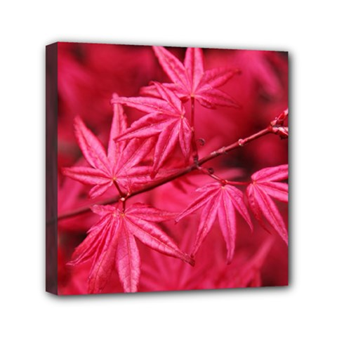 Red Autumn Mini Canvas 6  X 6  (framed) by ADIStyle