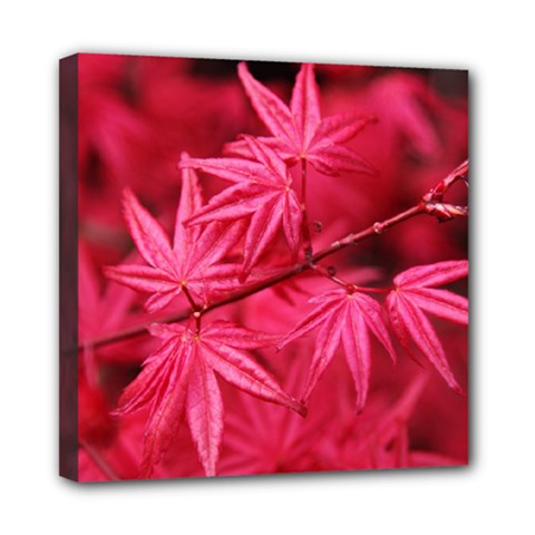 Red Autumn Mini Canvas 8  X 8  (framed) by ADIStyle