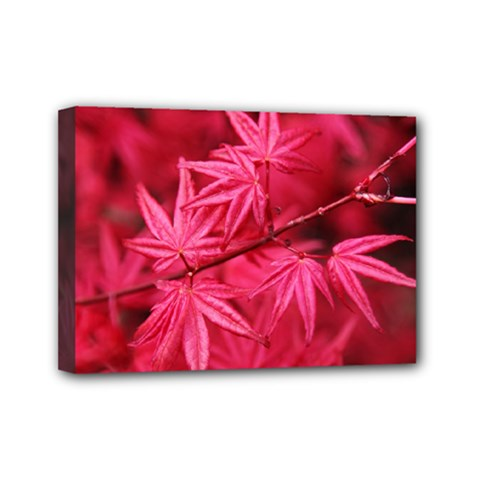 Red Autumn Mini Canvas 7  X 5  (framed) by ADIStyle
