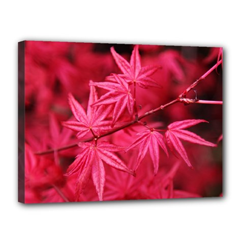 Red Autumn Canvas 16  X 12  (framed) by ADIStyle