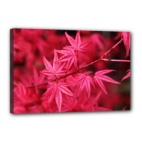 Red Autumn Canvas 18  X 12  (framed) by ADIStyle