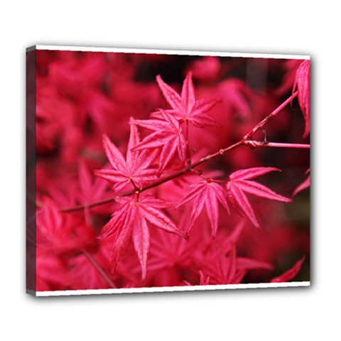 Red Autumn Deluxe Canvas 24  X 20  (framed) by ADIStyle