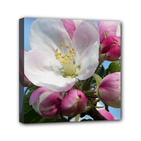Apple Blossom  Mini Canvas 6  X 6  (framed) by ADIStyle
