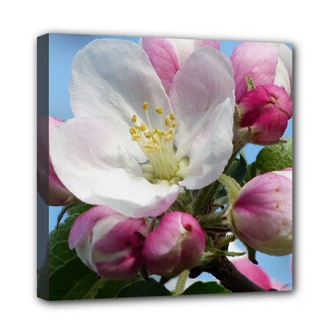 Apple Blossom  Mini Canvas 8  X 8  (framed) by ADIStyle