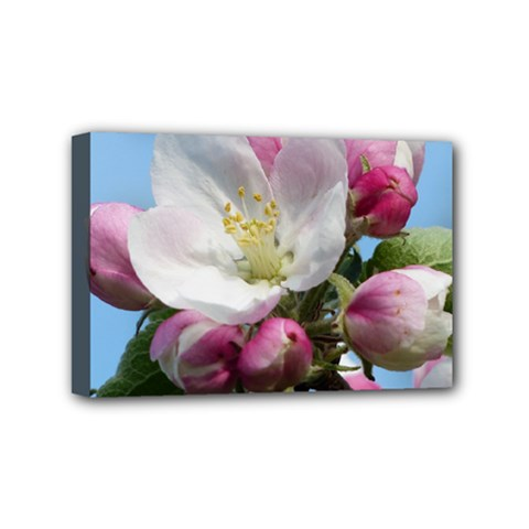 Apple Blossom  Mini Canvas 6  X 4  (framed) by ADIStyle