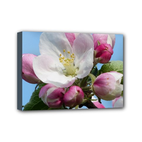 Apple Blossom  Mini Canvas 7  X 5  (framed) by ADIStyle