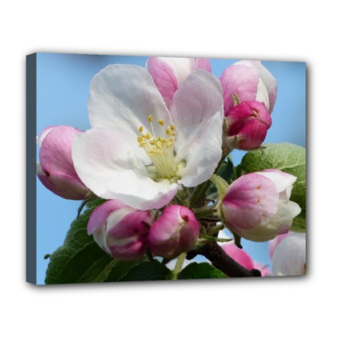 Apple Blossom  Canvas 14  X 11  (framed) by ADIStyle