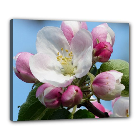 Apple Blossom  Canvas 20  X 16  (framed) by ADIStyle
