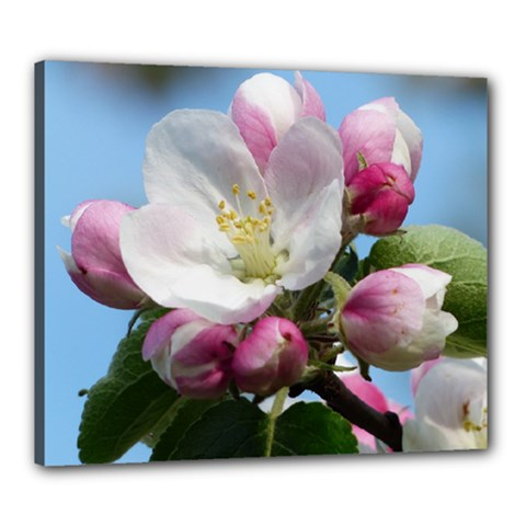 Apple Blossom  Canvas 24  X 20  (framed) by ADIStyle