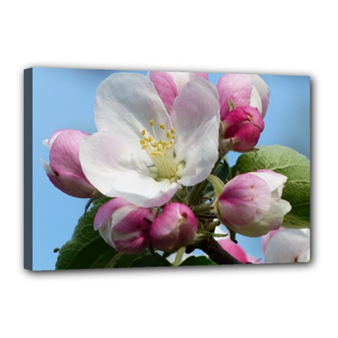Apple Blossom  Canvas 18  X 12  (framed) by ADIStyle