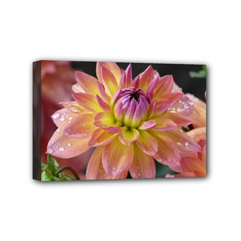 Dahlia Garden  Mini Canvas 6  X 4  (framed) by ADIStyle
