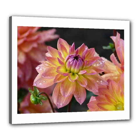 Dahlia Garden  Canvas 24  X 20  (framed) by ADIStyle
