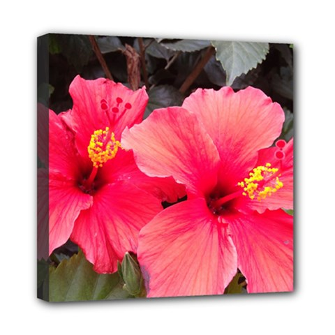 Red Hibiscus Mini Canvas 8  X 8  (framed) by ADIStyle