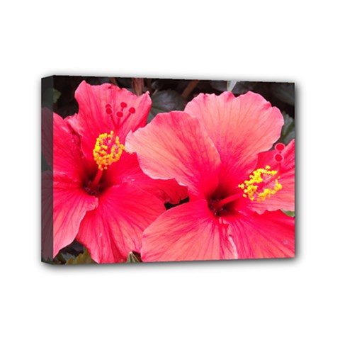 Red Hibiscus Mini Canvas 7  X 5  (framed) by ADIStyle