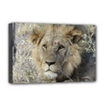 Leo the Lion - Deluxe Canvas 18  x 12  (Stretched)