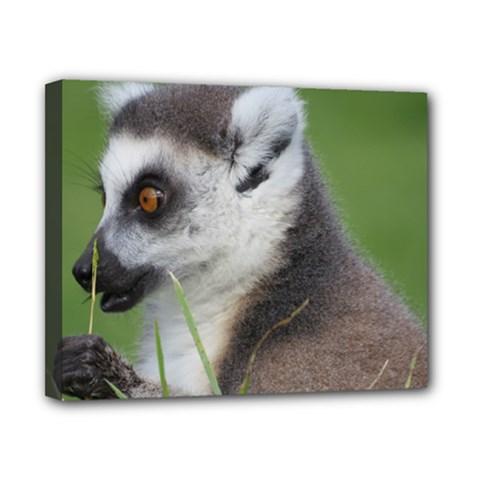 Ring Tailed Lemur  2 Canvas 10  X 8  (framed)