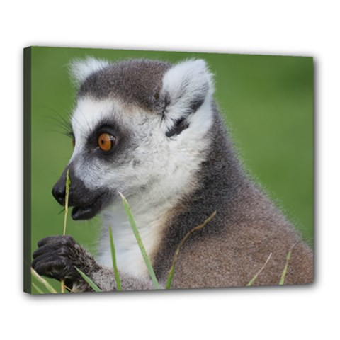 Ring Tailed Lemur  2 Canvas 20  X 16  (framed) by smokeart