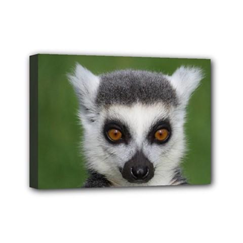 Ring Tailed Lemur Mini Canvas 7  X 5  (framed)