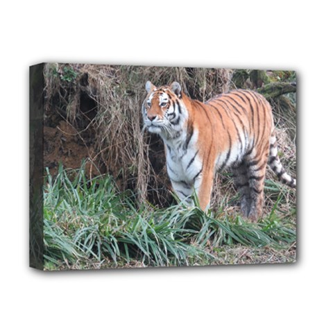 Tiger Deluxe Canvas 16  X 12  (framed)  by smokeart