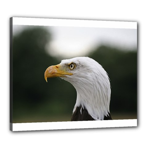 Bald Eagle (1) Canvas 24  X 20  (framed) by smokeart