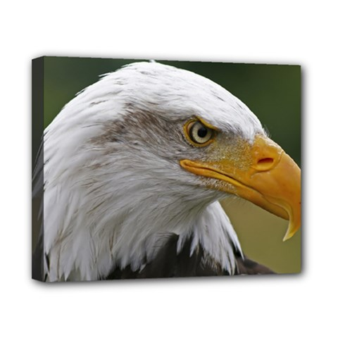 Bald Eagle (2) Canvas 10  X 8  (framed) by smokeart