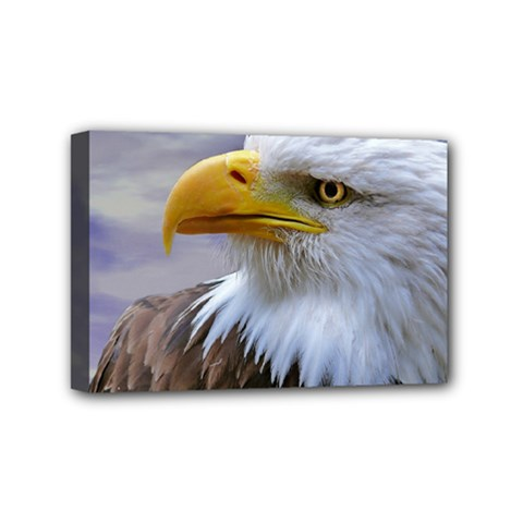 Bald Eagle Mini Canvas 6  X 4  (framed) by Siebenhuehner