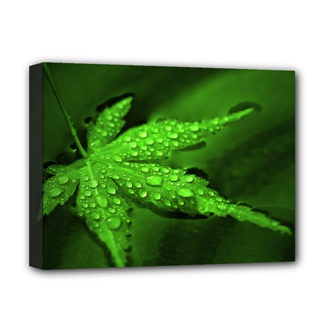 Leaf With Drops Deluxe Canvas 16  X 12  (framed)  by Siebenhuehner