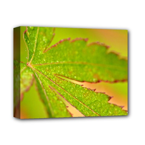 Leaf Deluxe Canvas 14  X 11  (framed) by Siebenhuehner