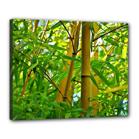 Bamboo Canvas 20  X 16  (framed) by Siebenhuehner