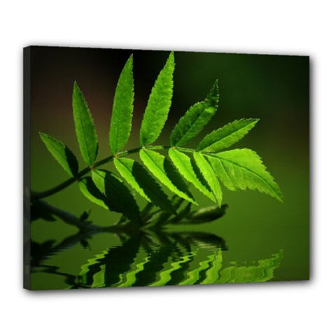 Leaf Canvas 20  X 16  (framed) by Siebenhuehner