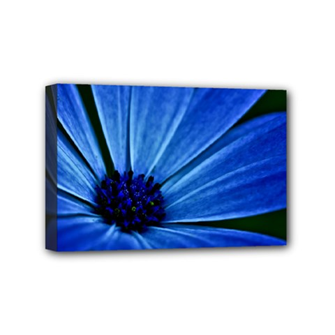 Flower Mini Canvas 6  X 4  (framed) by Siebenhuehner
