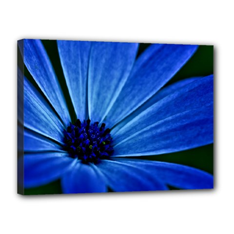Flower Canvas 16  X 12  (framed) by Siebenhuehner