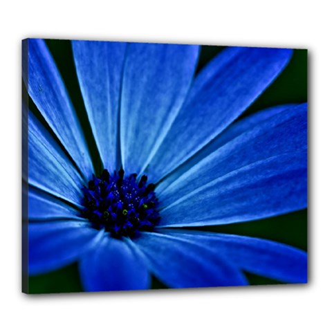 Flower Canvas 24  X 20  (framed) by Siebenhuehner