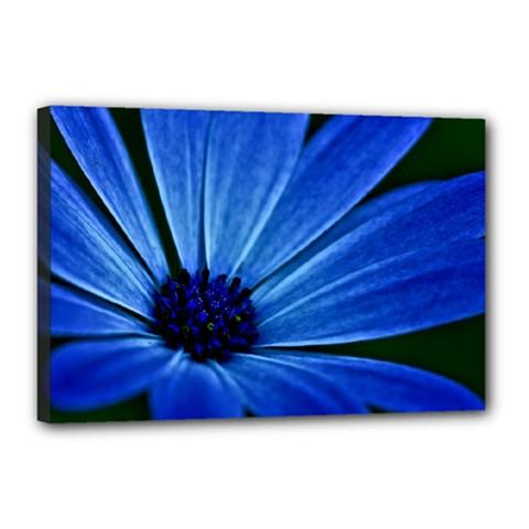 Flower Canvas 18  X 12  (framed) by Siebenhuehner