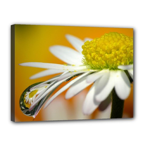 Daisy With Drops Canvas 16  X 12  (framed) by Siebenhuehner