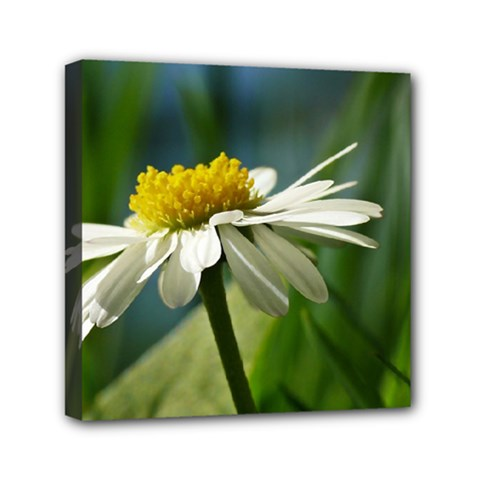 Daisy Mini Canvas 6  X 6  (framed) by Siebenhuehner