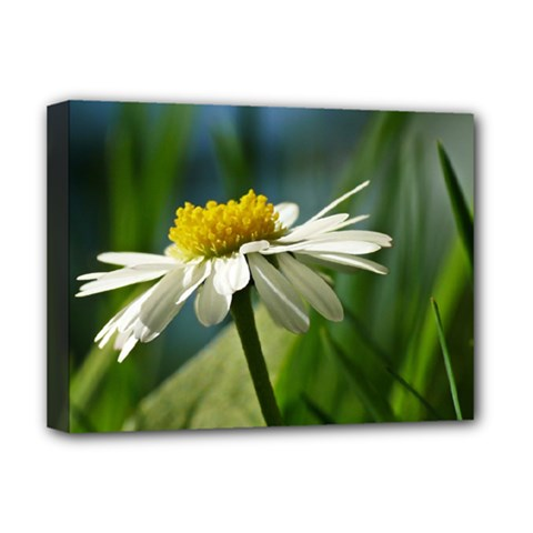 Daisy Deluxe Canvas 16  X 12  (framed)  by Siebenhuehner