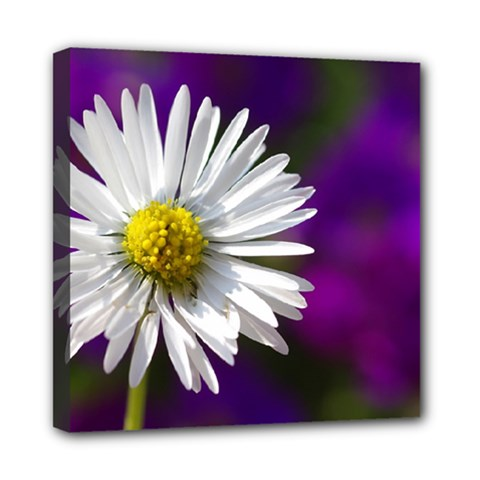 Daisy Mini Canvas 8  X 8  (framed) by Siebenhuehner