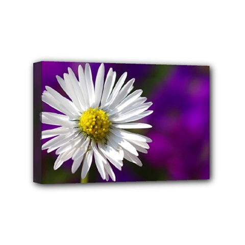 Daisy Mini Canvas 6  X 4  (framed) by Siebenhuehner