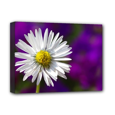 Daisy Deluxe Canvas 16  X 12  (framed)  by Siebenhuehner