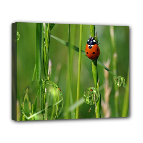 Ladybird Deluxe Canvas 20  X 16  (framed) by Siebenhuehner