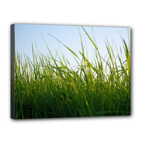 Grass Canvas 16  X 12  (framed)